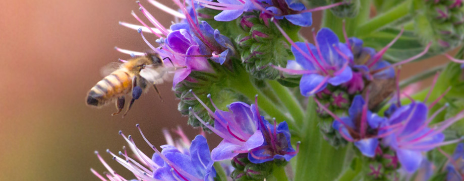 choose a bee friendly nursery- photo by Peter Alexander