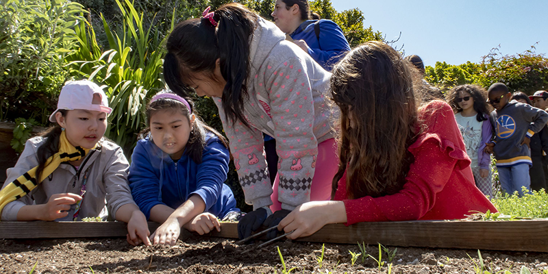 Students planting on a field trip to garden for the envionment