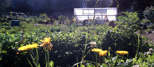 Community Gardens Our Home Our City