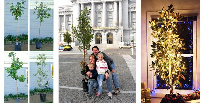 sfe_uf_adopt_a_tree_montage.jpg