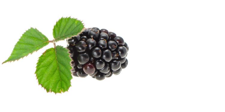 sfe_zw_hotnot_berry_750x375px.jpg