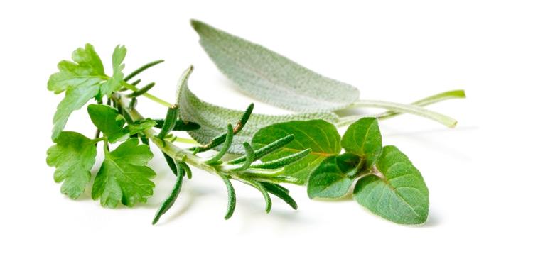 sfe_zw_keepalive_herbs_750x375px.jpg