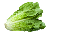 stock-photo-478021-green-leaf-lettuce.jpg