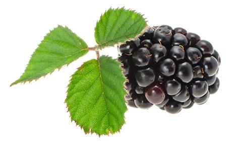 photo of blackberry