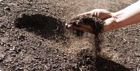 sfe zw news compost hands jpg